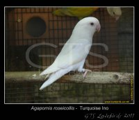 Albino White Parrots Avian Avenue Parrot Forum