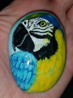 MacawRock1.jpg