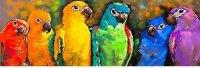 parrot canvas print.jpg