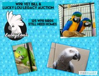 Auction Pic.jpg