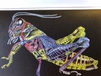 grasshopper (3).jpg