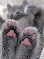 cat feet.jpg