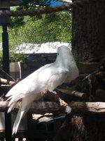 Dallas Zoo 6.jpg