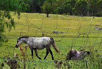 horse P1180441.jpg