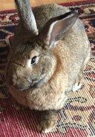 Easter Bunny!.JPG