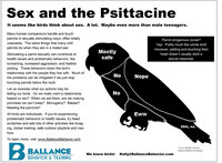 ballance-behavior-and-training-petting-the-pet-parrot-updated-version-10-3.jpg