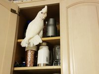 elvis cupboard3.jpg